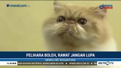 Cara Memelihara Kucing yang Baik dan Benar