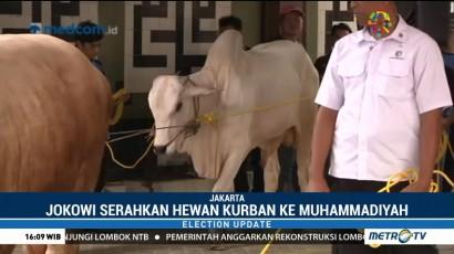 Jokowi Serahkan Dua Ekor Sapi Kurban ke PP Muhammadiyah