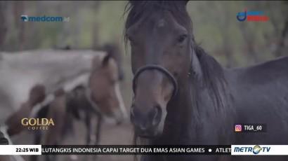 Identitas Kuda Sumba (1)