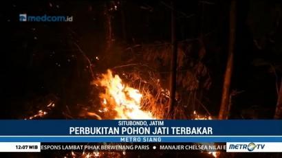 Perbukitan Pohon Jati di Situbondo Terbakar