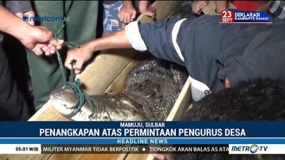 Kerap Meresahkan Warga, Buaya di Sungai Tubo Berhasil Ditangkap