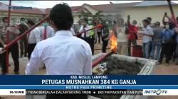 Polres Mesuji Musnahkan 384 Kg Ganja