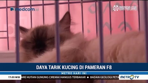 Daya Tarik Kucing di Pameran F8