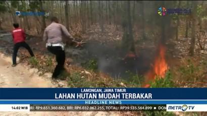 Kebakaran Lahan di Lamongan Diduga Akibat Puntung Rokok