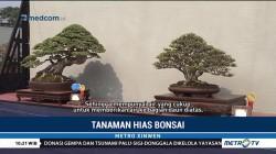 Bonsai, Kombinasi Seni dan Keindahan Alam