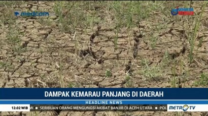 Puluhan Hektare Tanaman Padi di Musi Rawas Terancam Mati