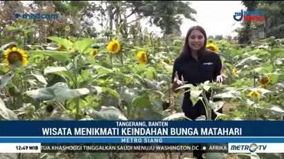 Wisata Taman Bunga Matahari di Tengah Kota