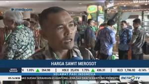Harga Sawit Merosot