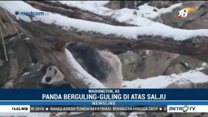 Aksi Panda Sambut Salju Pertama Musim Dingin di Washington