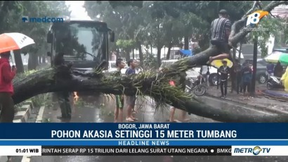 Bogor Diterpa Hujan Angin Kencang, Sebuah Pohon Besar Tumbang