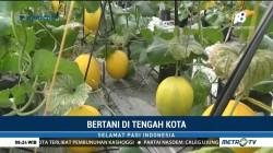 Bertani di Tengah Kota