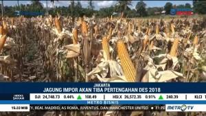 Jagung Impor Masuk ke Indonesia Pertengahan Desember