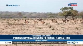 Pesona Africa van Java