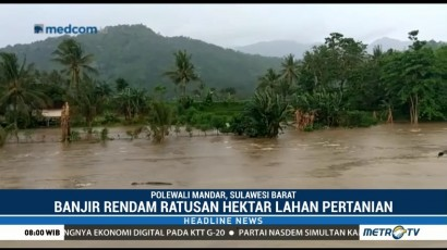 Banjir Merendam Ratusan Lahan Hektare Pertanian di Polewali Mandar