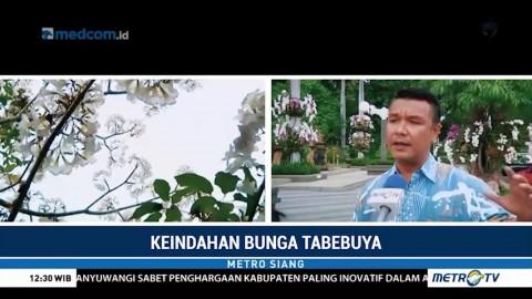 Menikmati Keindahan Bunga Tabebuya di Surabaya