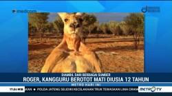 Roger, Kangguru Berotot Mati di Usia 12 Tahun