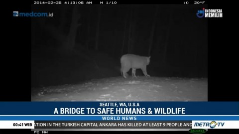 A Bridge to Safe Humans & Wildlife