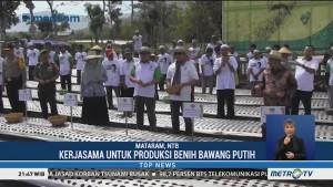 Moeldoko Tanam Benih Bawang Putih di Lombok