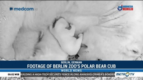 Footage of Berlin Zoo's Polar Bear Cub