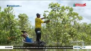 Solusi Deforestasi