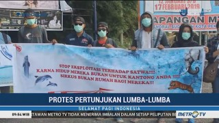 Komunitas Pecinta Satwa Protes Atraksi Lumba-lumba di Pekanbaru