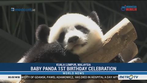 Panda Celebrates First Birthday in Malaysian Zoo