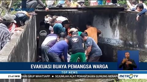 Momen Dramatis Evakuasi Buaya Pemangsa Warga di Minahasa