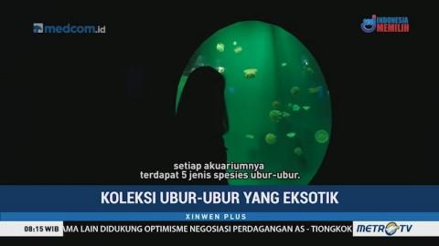 Koleksi Ubur-ubur yang Eksotik