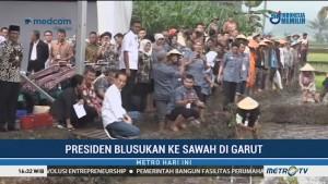 Jokowi Blusukan ke Sawah di Garut