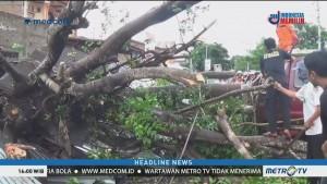 Pohon Tumbang Timpa Mobil di Bulukumba, 2 Orang Terluka