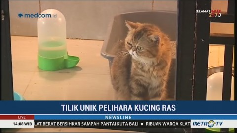 Tips Hemat Merawat Kucing Ras