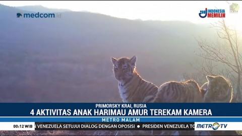 Harimau Rusia Langka Tertangkap Kamera