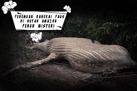 Penemuan Bangkai Paus di Hutan Amazon Penuh Misteri