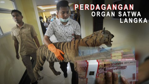 Polisi Bongkar Perdagangan Organ Satwa Langka