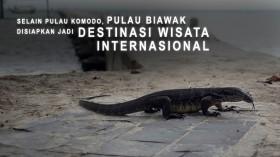 Selain Pulau Komodo, Pulau Biawak Disiapkan Jadi Destinasi Wisata Internasional