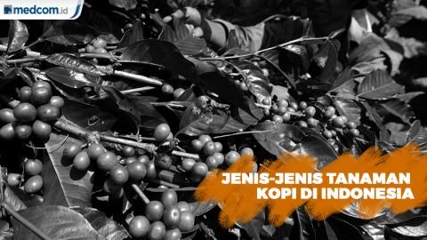 Kenali Jenis-jenis Tanaman Kopi Indonesia