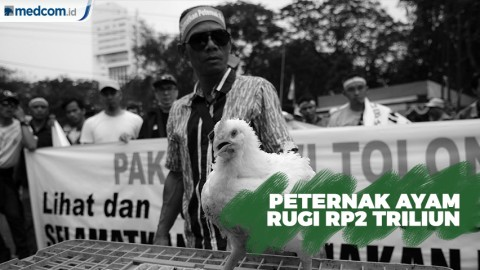 Rugi Rp2 Triliun, Peternak Ayam Demo di Kantor Menko Perekonomian