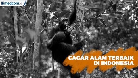 Lima Cagar Alam Terbaik di Indonesia