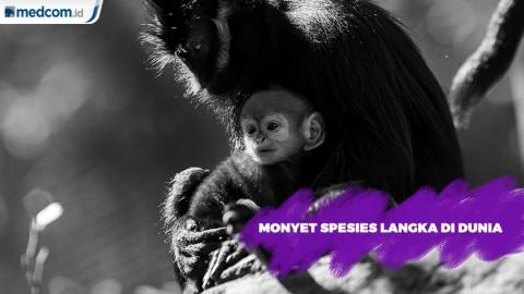 Monyet Spesies Langka di Dunia
