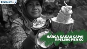 Harga Kakao Capai Rp31.300 per Kg