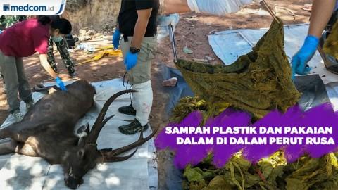 Sampah Plastik dan Pakaian Dalam di Dalam Perut Rusa Mati