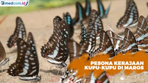 Melihat Fenomena Kupu-kupu di Bantimurung