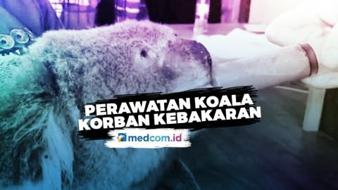 Dokter Hewan Bagikan Video Perawatan Koala Korban Kebakaran Hutan