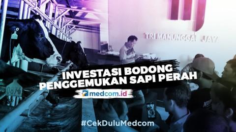 Highlight Primetime News  Metro TV - Investasi Bodong Penggemukan Sapi Perah