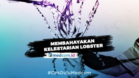 Soal Ekspor Benih Lobster, Susi Pudjiastuti: Itu Keputusan yang Tidak Bijak