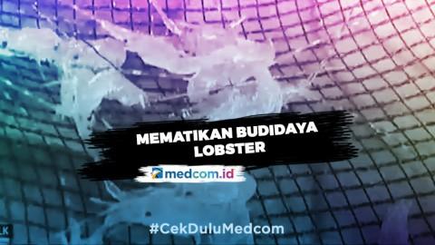 Kementerian KKP: Susi Pudjiastuti Mematikan Budidaya Lobster