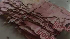 Viral Uang 15 Juta Dimakan Rayap, BI: Bisa Ditukar ke Bank