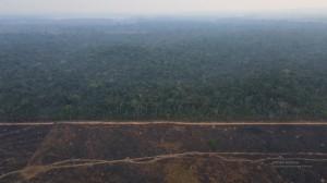 Penampakan Pembangunan Jalur Kereta Brasil di Hutan Amazon