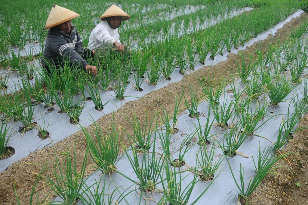 HKTI: Komoditas Pertanian Belum Mandiri