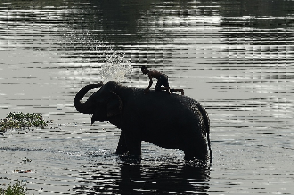 Empat Gajah Mati Tertabrak Kereta Api di India
